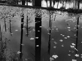 Leaves in Pond, 1956 Photographic Print by Brett Weston