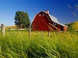 Red Barn in Long Grass Photographic Print by Bob Krist