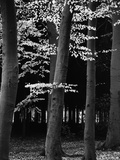 Beach Forest, Netherlands, 1971 Photographic Print by Brett Weston