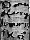Tree Bark Graffiti Photographic Print by Brett Weston