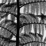 Fern Photographic Print by Brett Weston