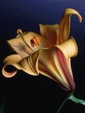 Lilium x 'Vico Queen' Photographic Print by Peter Smithers