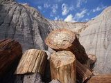 Petrified Logs Photographic Print by Tom Bean