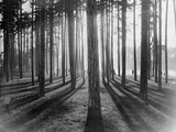 Lights and Shadows Showing Through the Trees Photographic Print by Bettmann