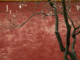 Flowering Pear Tree Photographic Print by Keren Su