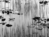 Reeds and Lily Pads Photographic Print by Brett Weston