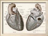 Two Views of the Heart with the Parts Labelled in Latin Framed Giclee Print