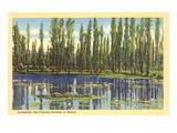 Xochimilco, Floating Gardens Poster