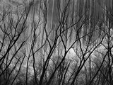 Trees at the Base of a Cliff Photographic Print by Brett Weston