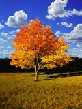 Tree in Autumn Photographic Print by Randy Wells