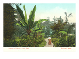 Avenue of Palms, Como Park, St. Paul, Minnesota Print