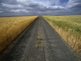 Gravel Road Passing Through Wheat Field Photographic Print by Darrell Gulin