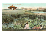 Lily Pond, Branch Brook Park, New Jersey Print