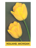 Holland, Michigan, Yellow Tulips Posters