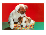 Jack Russell Puppies in Basket Print