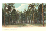 Pine Grove, Pinehurst, North Carolina Posters