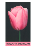 Holland, Michigan, Pink Tulip Prints