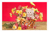 White Kitten in Basket of Daisies Affiches