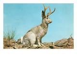 Jackalope Poster