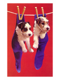 Terrier Puppies in Socks, Retro Prints
