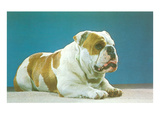 English Bulldog Posters
