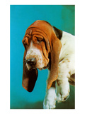 Sad Basset Hound Prints