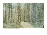 Enchanted Woods, White Mountains, New Hampshire Posters