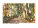 White Birches, New Hampshire Poster