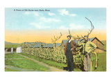 Fence of Elk Horns, Butte, Montana Posters