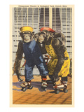 Chimps in Zoo, Detroit, Michigan Lámina giclée premium