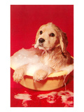 Puppy Bathing in Bowl Print