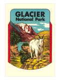 Glacier National Park, Rocky Mountain Goat, Montana Art