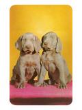 Weimaraner Puppies Schilderij
