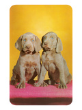 Weimaraner Puppies Prints
