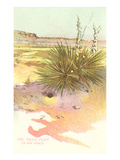 Yucca Plant, New Mexico Prints