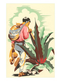 Man Harvesting Maguey for Pulque Prints