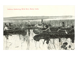 Indians Gathering Wild Rice in Canoes, Poster
