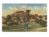 Burros by Camel Rock, Pojoaque, New Mexico Prints
