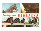 Horses, Greetings from Nebraska Prints