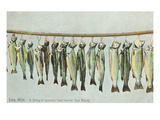 Hanging Trout, Soo Rapids, Michigan Posters