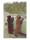 Bears Begging at Side of Car Poster