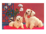Two Poodles Posters