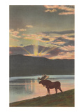 Moose at Sunset, Montana Posters