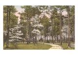 Deer Park, Pinehurst, North Carolina Umění