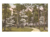 Deer Park, Pinehurst, North Carolina Print