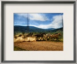 Stampede of the Wild Horses Framed Photographic Print by Trey Ratcliff