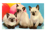 Three Siamese Kittens Art