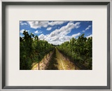 The Wines of New Zealand Framed Photographic Print by Trey Ratcliff