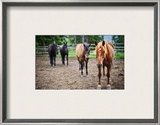 Four Horses Framed Photographic Print by Trey Ratcliff