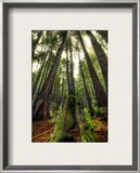 The Giants in the Muir Woods Framed Photographic Print by Trey Ratcliff